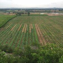 寧城赤巖紅圖片