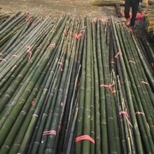 竹竿零售,规格齐备图片