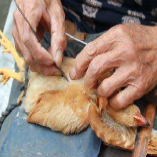 阉鸡后伸脖张口呼吸用什/么药,阉鸡后呼吸道用囊浊消图片