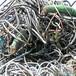 平湖市回收废铅2018新行情