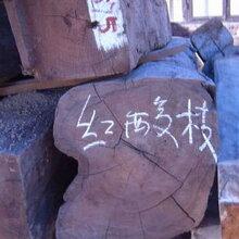 出售进口缅甸红酸枝原木批发-红酸枝原木价格