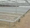 河南漯河无土栽培蔬菜玻璃温室、顶开窗温室大棚有机蔬菜种植