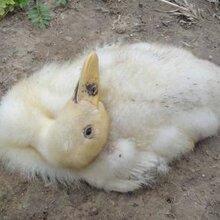 鴨抗病毒用藥-鴨子不吃料原因-鴨流感治療方法圖片