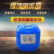 东营反渗透阻垢剂的批发价格美国蓝旗进口阻垢剂BF-106