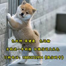 襄阳市养狗场位置图片