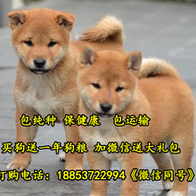 枣庄市宠物市场在哪图片