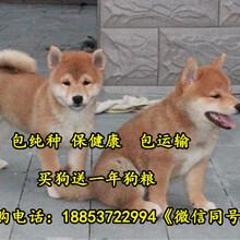 克孜勒苏养狗场厂子图片
