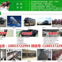 阳江市本地厂家图片