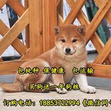 锡林郭勒养狗场位置图片