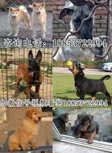 安阳市养狗场位置图片
