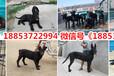 連云港寵物市場在哪
