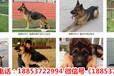 江北區賣狗的廠子