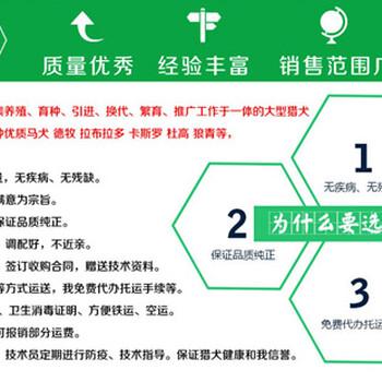 中宁县狗市场