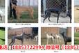 广州哪里有卖狗的