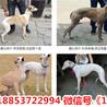 广东惠州惠东县宠物市场在哪