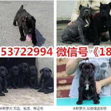 香河县狗场联系电话图片