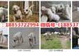 柘荣县宠物市场在哪