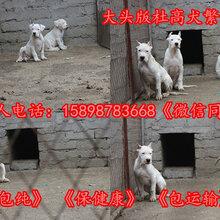 嘉陵宠物市场图片