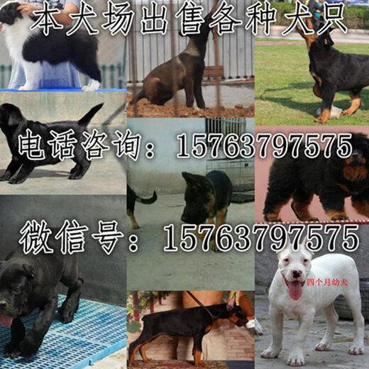 天津本地有沒有狗場送教程一套