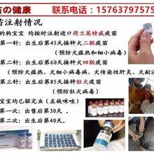 惠州市本地有沒有狗場送教程一套圖片