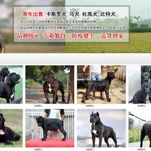 多年養殖大竹附近養狗場品種圖片