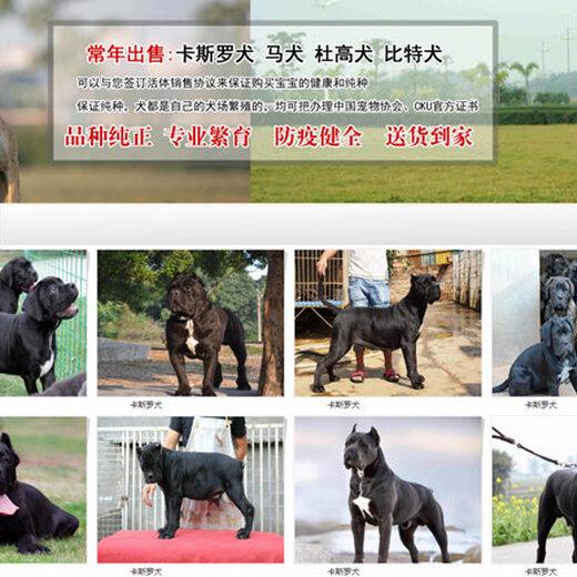 江南三个月的阿拉斯加价格养狗基地