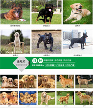 攀枝花西區養狗基地行情價格圖片