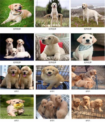 南丰三个月的博美价格养狗场