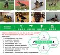 延安安塞哈士奇价格养狗基地图片