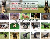 邢台沙河狗场位置每日报价图片5