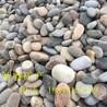 河北智睿供应鹅卵石加工园林绿化专用鹅卵石铺路工程黑色石头鹅卵石原石