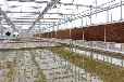 出口溫室大棚配件骨架材料加工定制-大棚設施