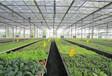 温室工程温室大棚建设山东豪达瑞科温室设备科技有限公司