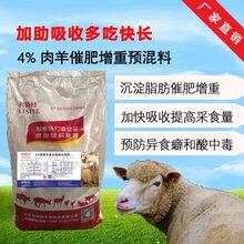 育肥羊饲料价格肉羊预混料效果