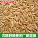 供应粮油燕麦米批发有机麦片农产品
