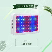 跨境货源600w大棚室内瓜果花卉种植LED植物生长灯育苗生长补光灯图片
