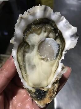 济南生蚝多少钱一斤鲜活海蛎子产地直发