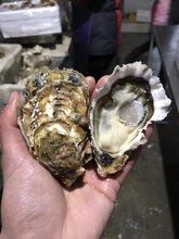 乳山牡蛎厂家新鲜海蛎子批发价格