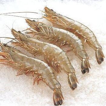 熟冻南美白对虾对虾海虾批发