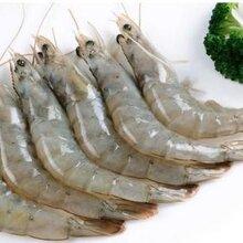 山东对虾产地批发,鲜活南美白对虾货源图片