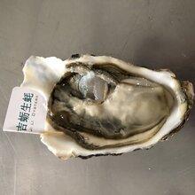 内蒙生蚝?#35805;?#22810;少钱一斤乳山牡蛎在哪里批发
