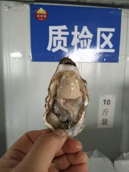 任丘生蚝产地批发鲜活海蛎子价格