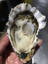 供应乳山牡蛎微商金给利生蚝厂家直发