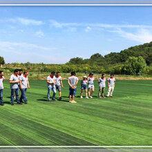 春季组织武昌周边公司团建活动农家乐的项目流程你觉得怎样图片