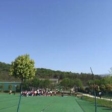 这样的周末去哪里这个农家乐的武汉红色之旅已经好几年了图片