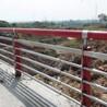 防撞护栏景观护栏_桥梁护栏_市政护栏_道路护栏