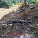 地基開挖遇到硬石頭炮錘打不出量怎么辦巖石分裂機價格