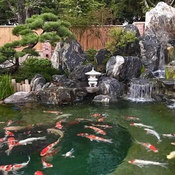 济南庭院锦鲤鱼池在养殖锦鲤时的消毒方法