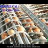 蛋品蒸煮剝殼生產線