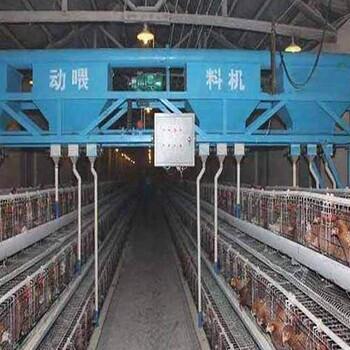 小鸡笼尺寸,两门小鸡笼可养320只鸡
